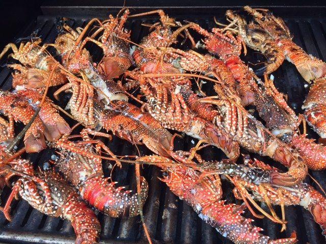 axa 2016 crayfish shell up