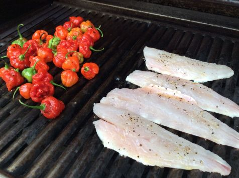 axa 2016 grill w peppers and snapper