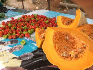 axa 2016 sensational peppers squash